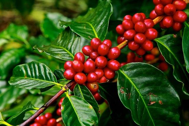 Coffee Plantation Stay In Chikmagalur